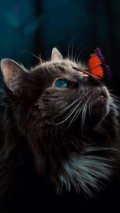 - Katzen - - – Katzen – Les images impressionnantes de diy face mask que l'on propose pour vous Un - Cute Cats And Kittens, Baby Cats, Kittens Cutest, Pretty Cats, Beautiful Cats, Animals Beautiful, Cute Cat Wallpaper, Animal Wallpaper, Beautiful Wallpaper