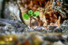 Photo I am growing by Agata Raszke on 500px