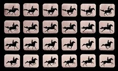 A series of photographs shows twenty-four consecutive images of a man riding a horse after jumping a hurdle. The images were captured by pioneering photographer Eadweard James Muybridge, circa 1881. M