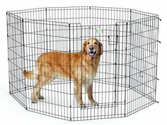 MidWest Homes for Pets MaxxLock Exercise Pen for Pets *** To view further, visit now : Crates, Houses and Pens for dogs