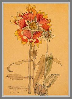 Gallardia by C R Makintosh by mpt.1607, via Flickr