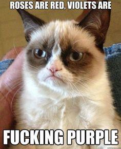 amo o grumpy cat
