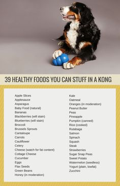 39 Healthy Treats You Can Stuff in a Kong | Puppy Leaks