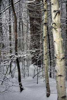 #winter #snow #white