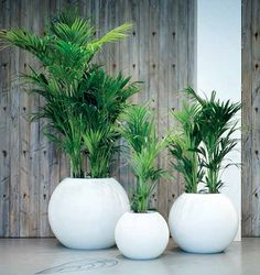 Are you looking for plants and planters similar to this? ...adding a touch of class...very unique! Get in touch to request a brochure or discuss exactly what you are looking for, it's more than likely that we'd supply it! Check out our other live plants or give us a call and we'd be more than happy to chat.