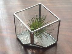テラリウム・cube(S・ゆらめき)の画像1枚目