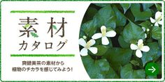 楽しむ・アタル|爽健美茶(そうけんびちゃ)