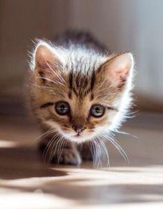 Cautious Little Kitten.
