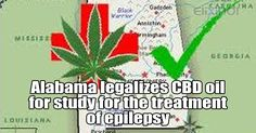 """Alabama legalizes CBD oil for study for treatment of epilepsy. Through a study at UAB, we have seen the benefit of cannabidiol to help with chronic seizures. I hope we will be able to collect information that will determine the efficacy of this substance in other chronic debilitating diseases."""" http://www.thecannabist.co/2016/05/11/alabama-medical-marijuana-gov-bentley-mmj-oil-bill/53600/"""