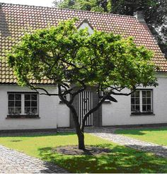 Affordable And Effective Cottage Garden Designing Methods For Your Home Your home is your world, and much like the world around us, looks are important. Garden Trees, Garden Paths, Dream Garden, Home And Garden, Dutch Gardens, Cottage Garden Design, Garden Pictures, Backyard Landscaping, Land Scape