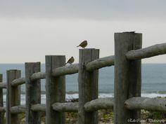 Zoom Gallery: Pássaros