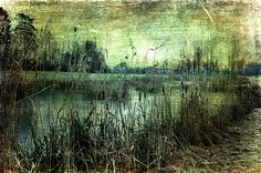 Silence by a Pond by Randi Grace Nilsberg Pond, Restoration, In This Moment, Art Prints, Wall Art, Shop, Painting, Art Impressions, Water Pond