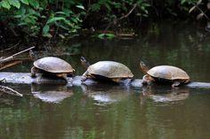 Parque Nacional de Tortuguero, Costa Rica