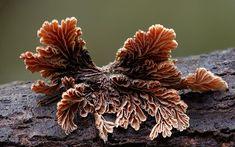 Волшебные грибы от Steve Axford