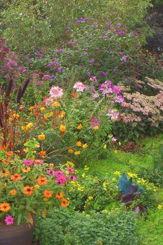 Good Butterfly And Hummingbird Garden Plans | New Photos Of Last 2 Seasonu0027s  Gardens