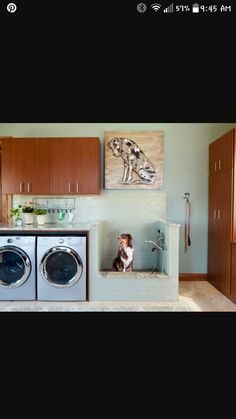 Laundry room for vertical spaces for our new home pinterest laundry room with dog bath solutioingenieria Image collections