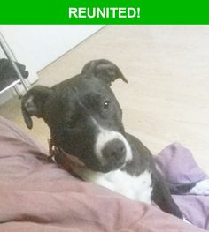 Great news! Happy to report that Katana has been reunited and is now home safe and sound! :)