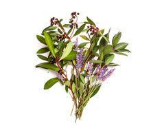 Tasmanian Pepper & Lavender features in Bondi Wash Scent 1.