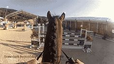 horse // amazing // jumping // passion // my love // my life // my breath // my everythink // just whole // gif
