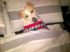Nice and snuggly in my bed and doggy outfit! Enter your pet to win a share of R101 000! #SouthAfrica only. #Pet competition. mymostbeautiful.com/