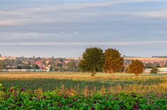 Baumgruppe im Sonnenaufgang by Michael Stollmann on 500px