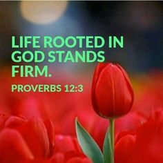 Proverbs 12:3 (KJV) A man shall not be established by wickedness: but the root of the righteous shall not be moved.