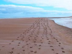 Are you leaving a footprint?