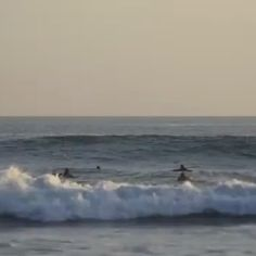 Dolphins sharing the waves #dolphins #surf #ocean #love #project0 🎥 @film_life_