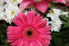 La vida es como un jardin ...  www.lunacandeleda.com