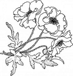 Drawing Of California Poppy Coloring Page Poppy Coloring Page, Flower Coloring Pages, Flowers Nature, Colorful Flowers, California Poppy Drawing, Flower Drawing Images, Online Coloring, Pictures To Draw, Fabric Painting