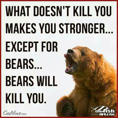 Bears will kill you ;)
