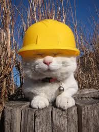 Image result for cats and construction