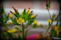 Beautiful weeds!