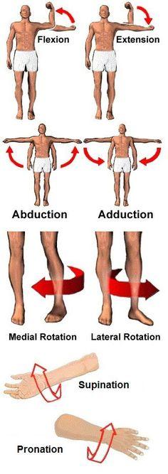 Human Anatomy Body Positions