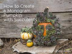 Pumpkin Monogram with Succulents Tutorial - Succulents and Sunshine