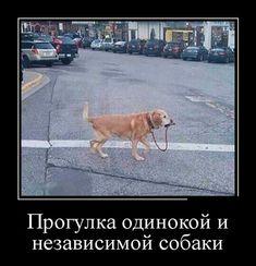 Фабрика приколов. #прогулка одинокой и независимой собаки