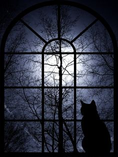 A black cat is gazing at the full moon night through an arched window. Description from pinterest.com. I searched for this on bing.com/images