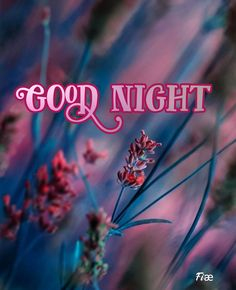 Good Night Blessings, Good Night Wishes, Good Night Quotes, Disney Kiss, Good Night Image, Beautiful Butterflies, Good Morning, Blessed, Messages