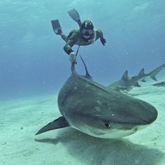 I want to swim with sharks   really you are not gonna get very far on this bucket list lol