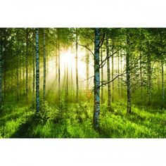 Forest fotobehang bij Behangwebshop