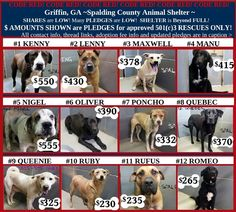 Georgia Folks Can You Foster With Rescue - Please Share and Consider Adopting or Fostering One to Save - Griffin, GA ~CODE RED!!~ We NEED EVERYONE'S HELP!! Please SHARE! Shelter is FULL! *UPDATED PLEDGE TOTALS (THOSE ARE NOT PRICES- THEY ARE PLEDGES TO APPROVED 501(c) RESCUES ONLY) , Individual LINKS and ID #'s are below in caption! Dogs are SHOWN in ORDER of URGENCY/Placement on Euth List! **Adoption Fee includes vaccines: Females~ $110 incl spay Males $85 incl neuter ($110 if over 75 lbs.)…