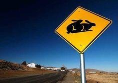 roadSigns11 - Crazy road signs