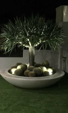 Dragon Tree In Giant Low Bowl Potsonline Maximus GRC Giant Low Bowl. We love the look created by Large Garden Planters, Garden Pots, Dry Garden, Garden Table, Outdoor Landscaping, Front Yard Landscaping, Palm Trees Landscaping, Back Gardens, Outdoor Gardens