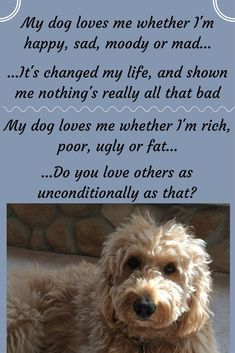 That's why God created them.  Dog is God spelled backwards because He gave them the gift of such unconditional love. #dogquotes