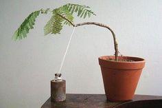 Tree shaping techniques | Guide To #Bonsai Trees | #Bonsai…