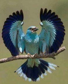 Beautiful Creatures, Animals Beautiful, Cute Animals, Cute Birds, Pretty Birds, Exotic Birds, Colorful Birds, Exotic Animals, Colorful Animals
