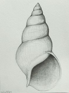 Drawing Pencil Shell number 2 Original pencil drawing on by SimpleArtStudio - Easy Pencil Drawings, Pencil Drawing Tutorials, Cool Art Drawings, Art Drawings Sketches, Drawing Ideas, Drawing Drawing, Drawing With Pencil, Drawings Of Love, Disney Pencil Drawings
