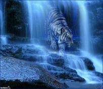 Beautiful tiger cross stitch pattern you choose size