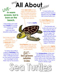"""My All About Sea Turtles Book - Ocean Animal Unit Study from Courtney McKerley on TeachersNotebook.com (9 pages)  - This """"All About Book"""" will be a fun addition to your classroom and lesson on sea turtles. This packet can be used along with books specific to the animal or it can be used on its own. Other animals you will see in the ocean animal series include the sea h"""