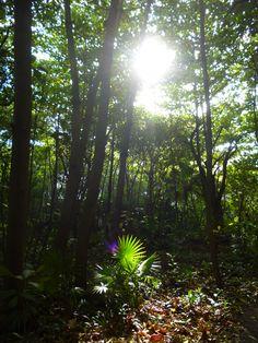Selva en Cancún, en las afueras del Museo Maya (una maravilla).  Subtle Worlds by Diana Westrup.  http://dianawestrup.wordpress.com